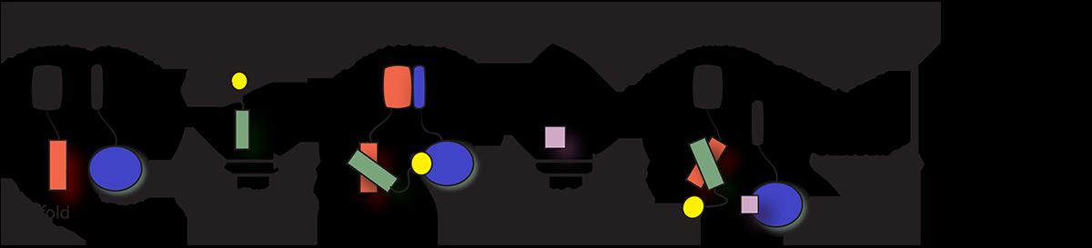 Cell-free-KinaseSeeker-assay-2